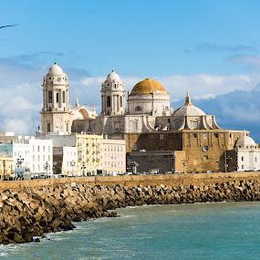 Dreamy Cadiz by Franco Beccari - Buildings & Architecture Public & Historical ( clouds, bird, sky, seagull, church, cadiz, sea, cathedral, beach, coast,  )