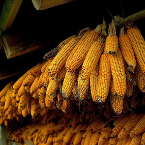 Corn by Iztok Urh - Nature Up Close Other Natural Objects