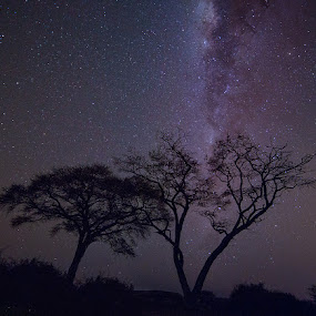 Under an African Sky by Buddy Eleazer - Landscapes Starscapes ( chobe, aug 2014, night photography, africa, night sky )