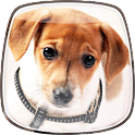 Cute Dogs Live Wallpaper icon