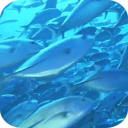 Ocean fish Live Wallpaper LOGO-APP點子