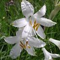 Garden Flowers 1 FREE icon