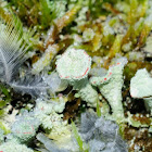 Feathers, ice and lichen
