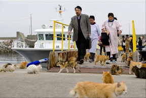 http://www.theatlantic.com/photo/2015/03/a-visit-to-aoshima-a-cat-island-in-japan/386647/