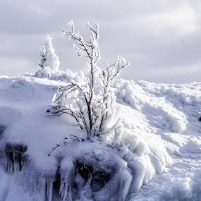 Minnesota Cold by Tammy Drombolis - Landscapes Weather ( , snow, winter, cold )
