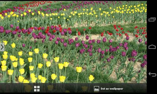 Beautiful Flowers Wallpapers screenshot 4