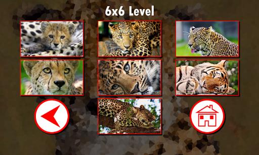 解謎必備免費app推薦|大型貓科動物拼圖線上免付費app下載|3C達人阿輝的APP