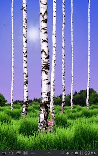 Birch Wood Live Wallpaper - screenshot thumbnail