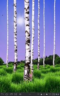 Birch Wood Live Wallpaper- screenshot thumbnail
