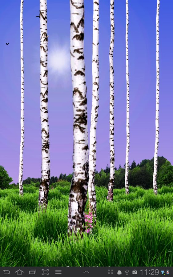 Birch Wood Live Wallpaper - screenshot