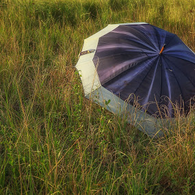 The umbrella by Eduardo Llerandi - Landscapes Travel ( field, umbrellas, grass, green, black,  )