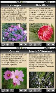 玩生活App|Flowers Bible免費|APP試玩
