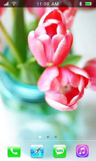 Springs Flowers Tulips HQ LWP