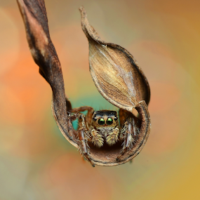 The Swing by Niney Azman - Animals Insects & Spiders ( makro bokeh )