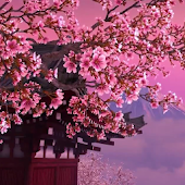 Sakura 3D. Live wallpaper.