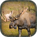 Moose Hunting Calls icon