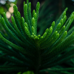 by Dharmesh Daula - Nature Up Close Leaves & Grasses (  )
