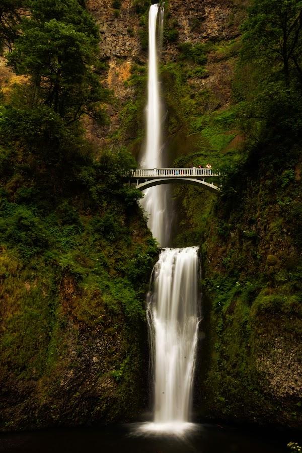 Mulltnomah Falls by Sandra Maldonado - Landscapes Mountains & Hills ( washington, oregon, falls, waterfall, mulltnomah falls )