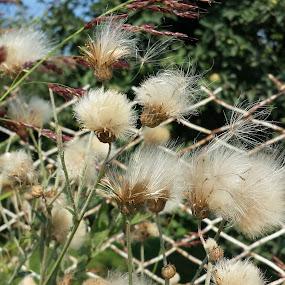 Flowers in the wind by Aleksa Stankovic - Flowers Flowers in the Wild ( fence, wind, nature, leaf, flower )