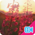 ► Sunset Flower Live WallPaper icon