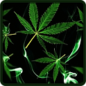 Weed live wallpaper icon