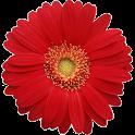Woman Calendar/ Feminap logo