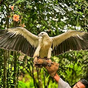 Agila by Bong Flores - Animals Birds ( davao, extinct, malagos, king fisher, philippine eagle )