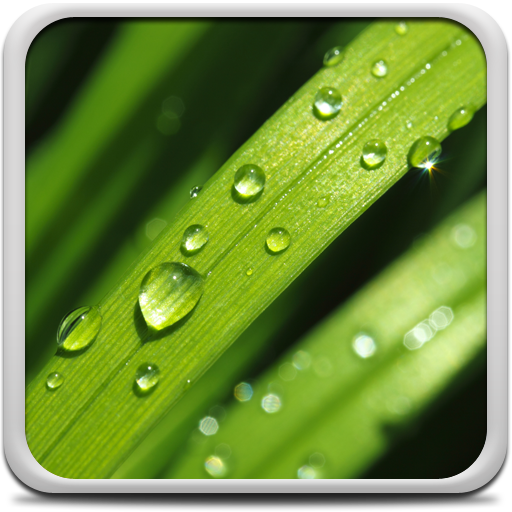 Dew Drops Live Wallpaper Icon