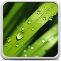 Dew Drops Live Wallpaper icon