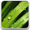 Dew Drops Live Wallpaper 3.0 Apk