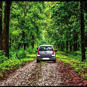 The Jungle Trip by Pritam Saha - Landscapes Forests (  )