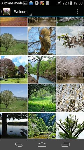 Spring Tree Wallpaper