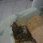 gecko~gecko