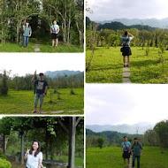 茶鄉桂花農園