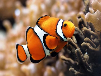 Fish HD Wallpaper - screenshot thumbnail