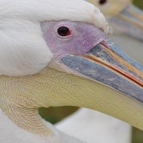 Beauty by Jamie Tambor - Animals Birds