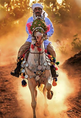Rider by Abdul Rehman - People Street & Candids ( mela, pakistan, multan, rural life of pakistan, rural life, horse rider,  )
