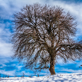 Stunning tree by Valics Lehel - Nature Up Close Trees & Bushes ( icy, frost, frozen, landscape, hoarfrost, mountains, cold, nature, ice, january, lonely, frosty, covered, cool, clouds, hill, chrismas, forest, rural, destination, country, field, december, season, february, blue, outdoors, fall, scene, scenery,  )