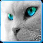 猫的声音 icon