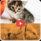 KidVid Pets