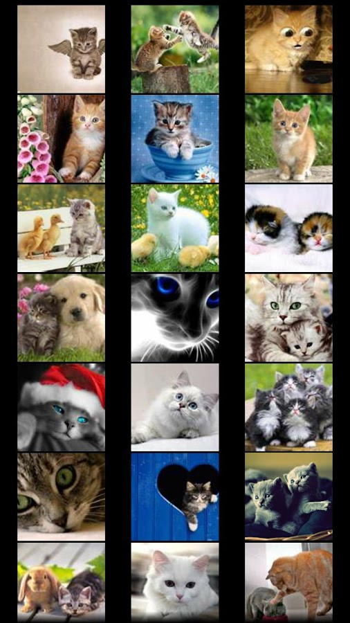 Cats Wallpapers - screenshot