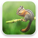 Little Chipmunk 3D Wallpaper icon