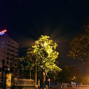 Light tree by Lê Thị Thanh  Tâm - City,  Street & Park  Night