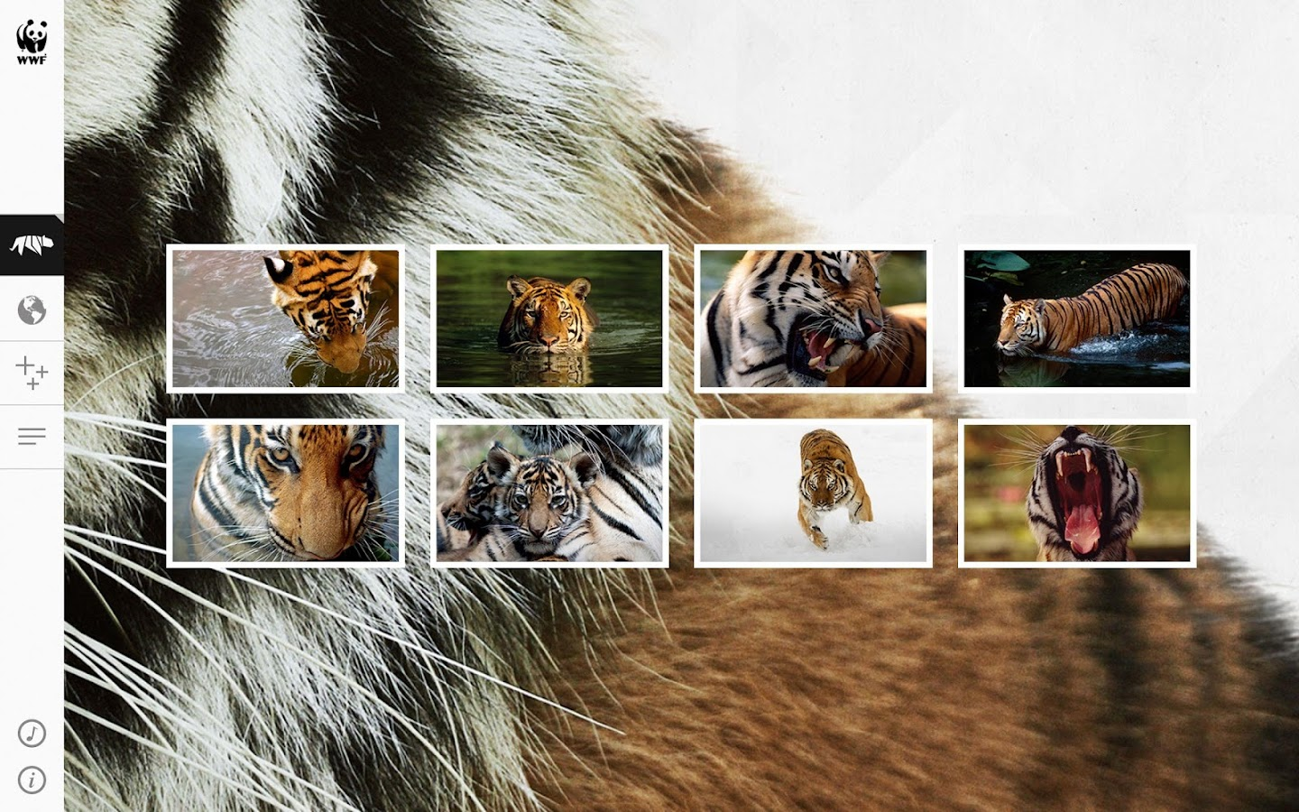 WWF Together: captura de pantalla