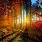 Forest Wallpapers II