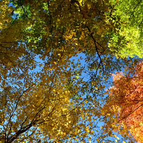 Under the canopy by Eddy Dufault - Nature Up Close Trees & Bushes