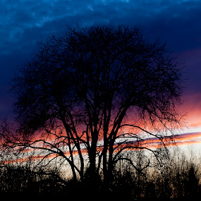 Lava on Air by Blerim Havolli - Landscapes Sunsets & Sunrises ( porsgrunn, havolli, silhuette, blerim, dark blue, norway, red, sky, tree, lava, blue, sunset, air )