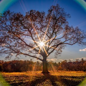 Circle of Life by Tom Moors - Nature Up Close Trees & Bushes ( tree, fall, circle, lens flare, sun )