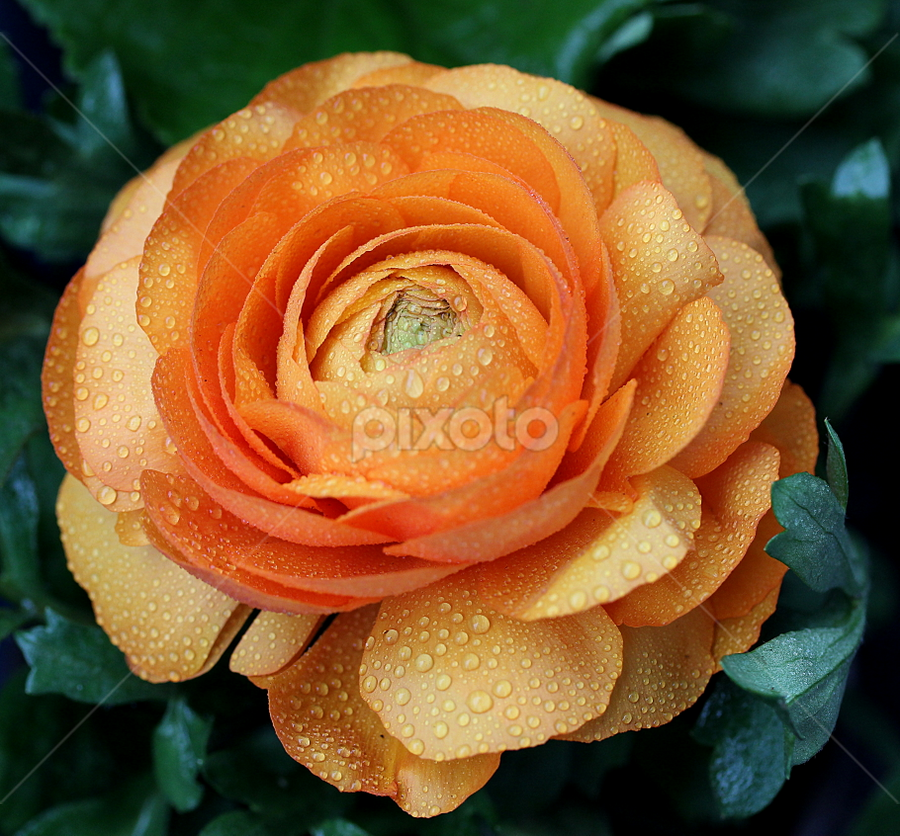 by Biljana Nikolic - Flowers Flower Gardens (  )