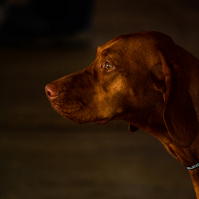 In the limelight by Angeline JoVan - Novices Only Pets ( red, dog,  )